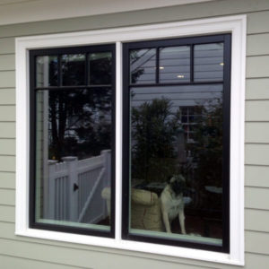 close up of dog staring out large window